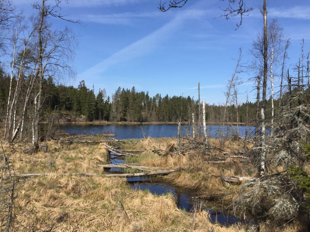 Lokalitet for regnbuegullveps Chrysis rutilans i Aremark, Østfold. Foto: Frode Ødegaard.